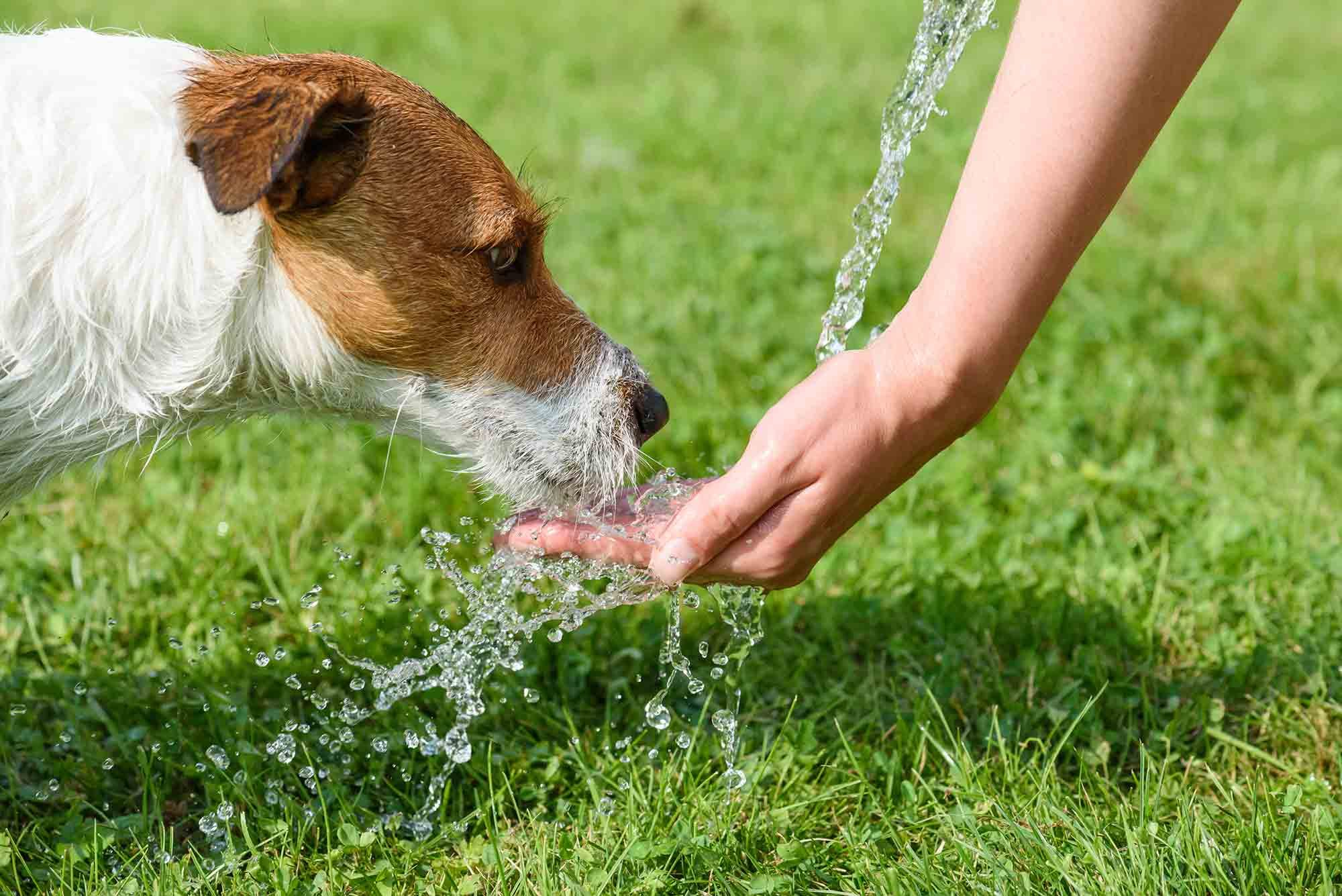 Summer pet safety is an important part of summer fun with pets!