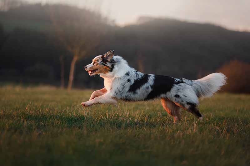 Orthopedic surgery in pets can help get your pet to exercise again and battle pet obesity.