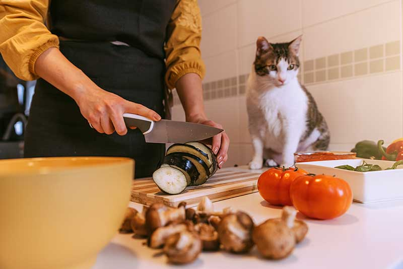 Delicious But Safe? Holiday Food Safety for Pets is Important to Pet Safety and Pet Nutrition