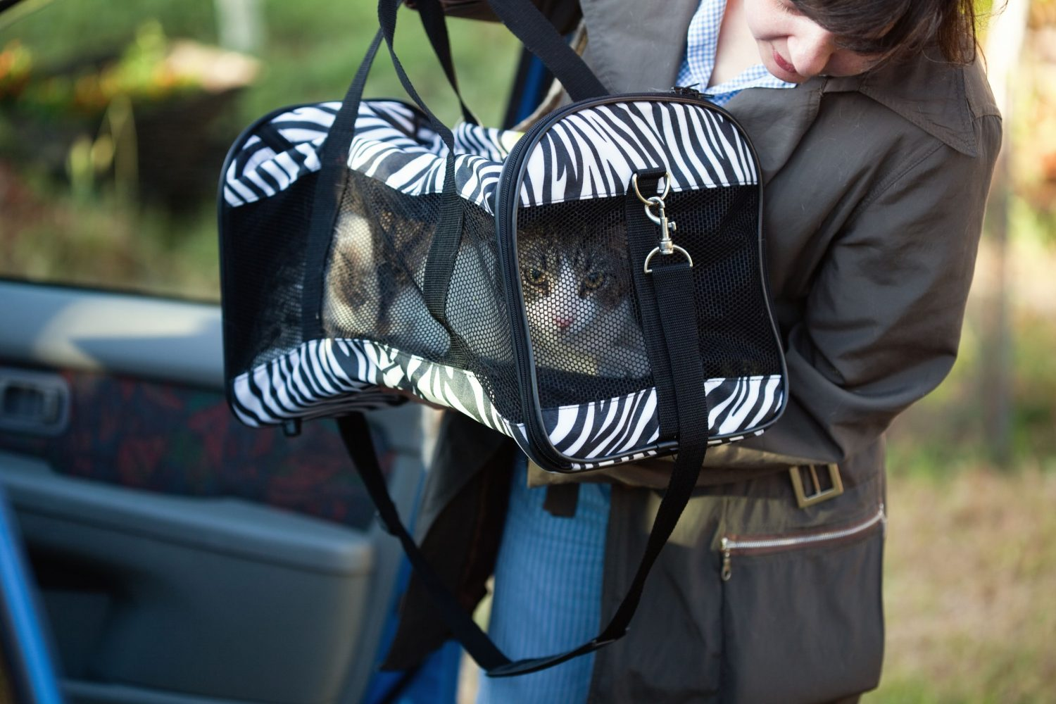 Cat in a pet carrier on the way to his veterinary appointment.