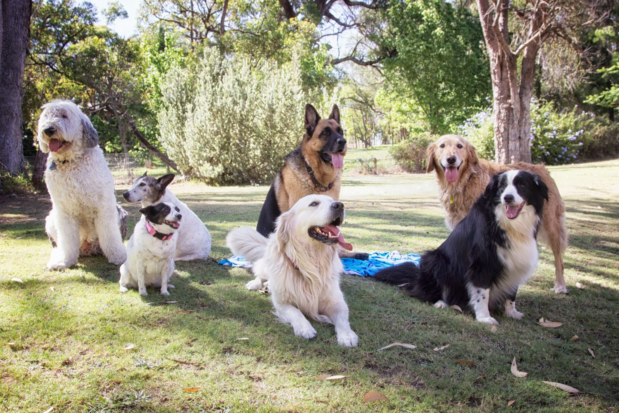 A group of dogs in the park.